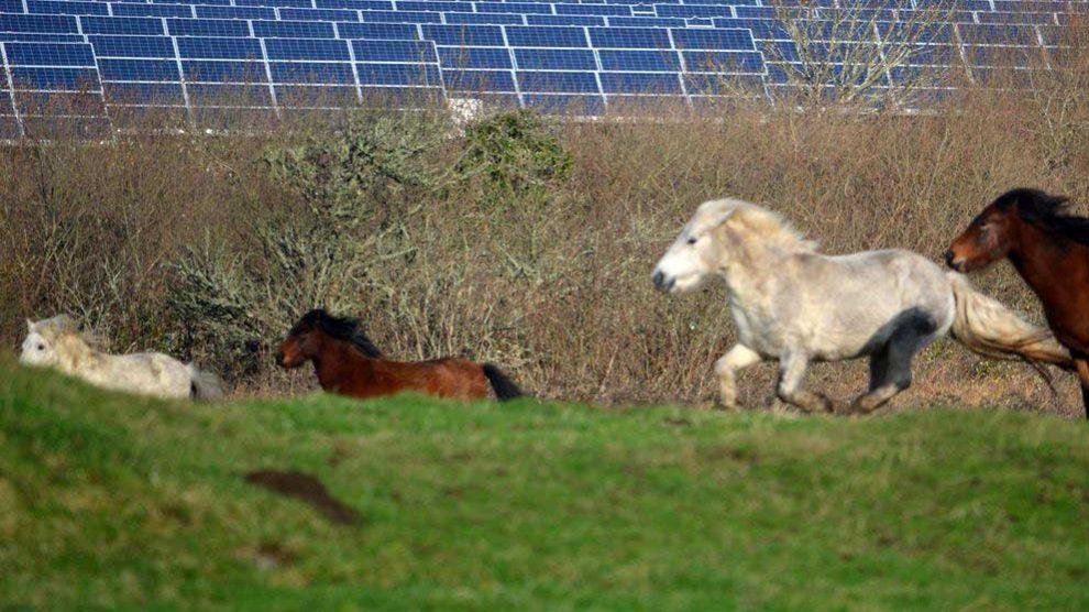برای فراهمکردن برق مرکز داده و دیگر فعالیتها، ایبی (eBay) در مزرعهٔ خورشیدی لوئیزیانا سرمایهگذاری کرد